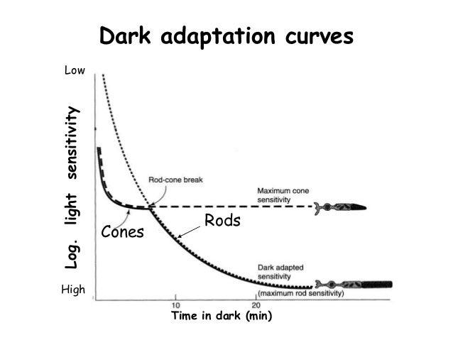 Image result for dark adaptometry