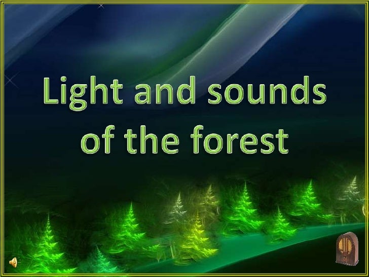 Light and sounds of the forest<br />