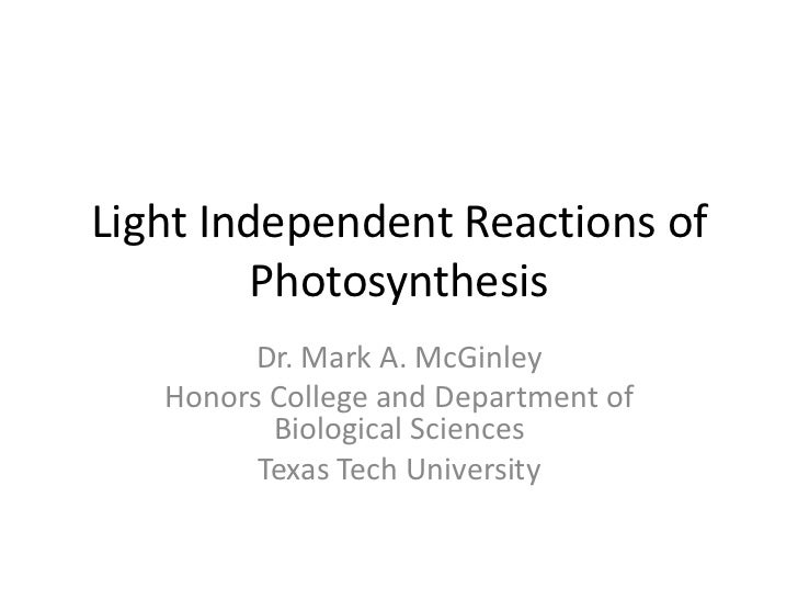 Light Independent Reactions of         Photosynthesis         Dr. Mark A. McGinley   Honors College and Department of     ...