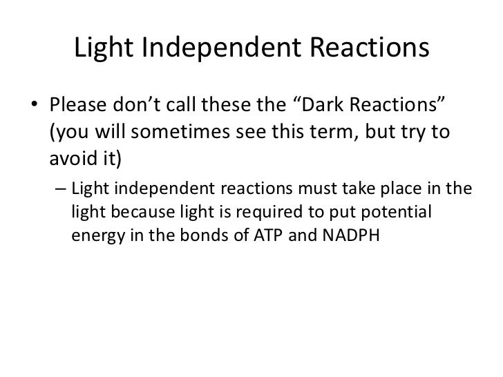 Light Independent Reaction Definition