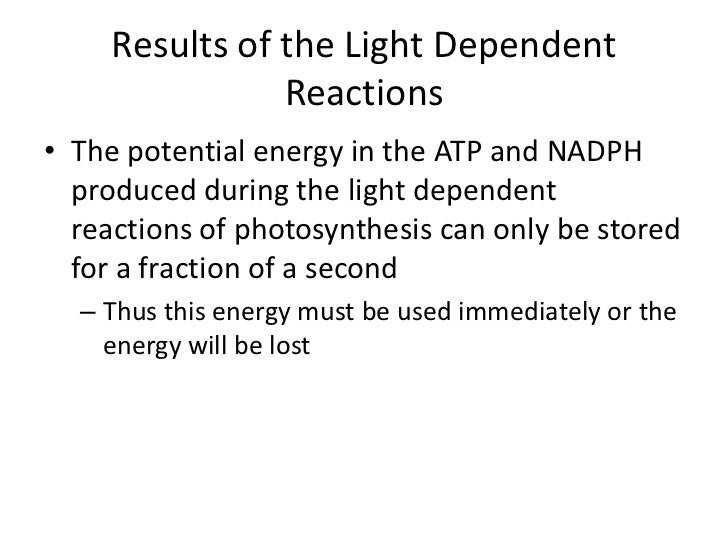the light independent reactions of photosynthesis Home » light-independent reaction definition noun the series of biochemical reactions in photosynthesis that do not require light to proceed, and ultimately.
