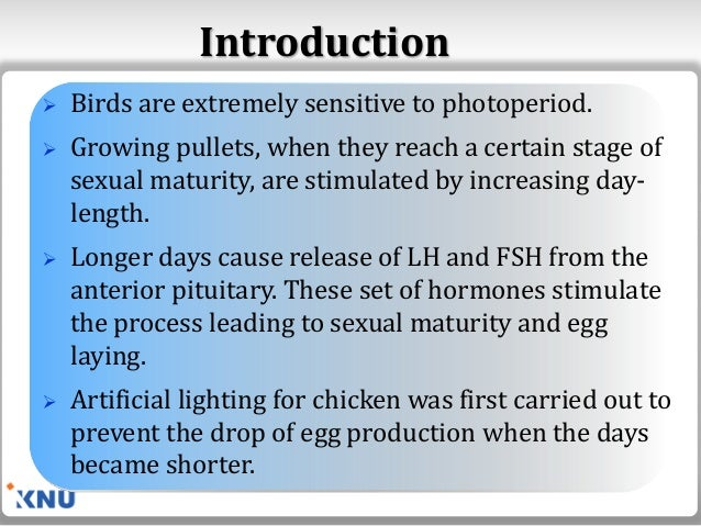 Lighting Management for Poultry