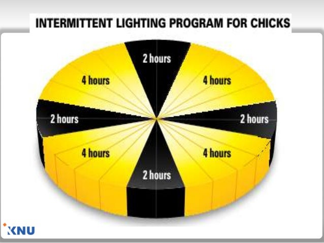 Lighting During Brooding Period; 5.  sc 1 st  SlideShare & Lighting Management for Poultry azcodes.com