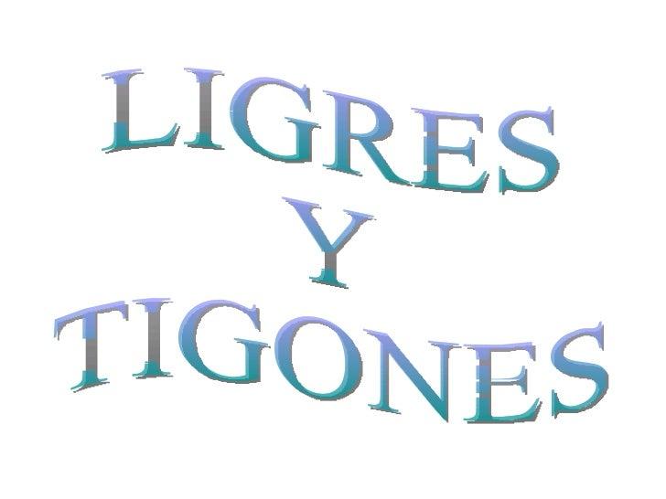LIGRES  Y  TIGONES