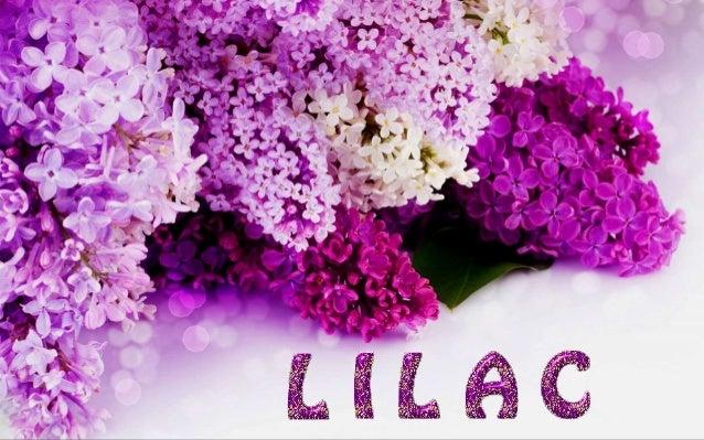 http://www.ppsparadicsom.net http://judy-pps.blogspot.com http://fauna-flora.gportal.hu