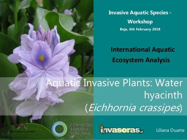 Liliana Duarte Invasive Aquatic Species - Workshop Beja, 6th February 2018 International Aquatic Ecosystem Analysis Aquati...