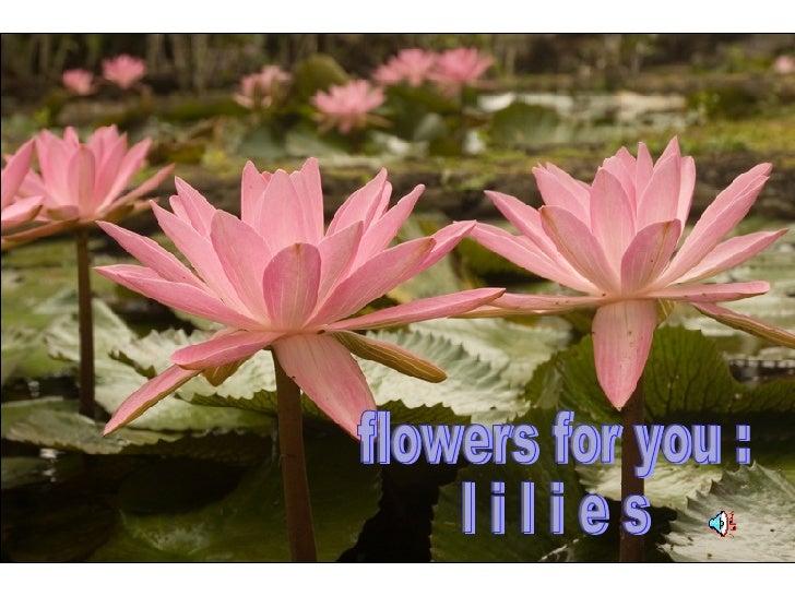 flowers for you : l i l i e s