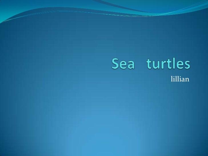 Sea   turtles<br />lillian<br />