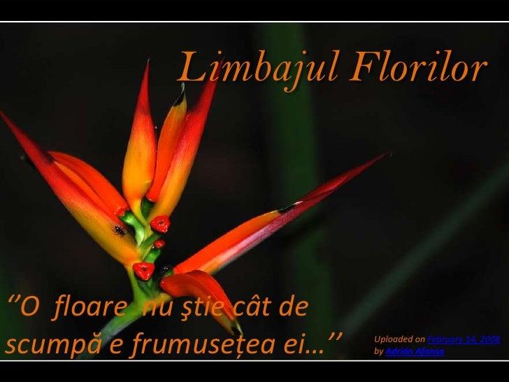 LimbajulFlorilor<br />''O  floare  nu ştie cât de scumpă e frumuseţea ei…''<br />Uploaded on February 14, 2008by AdriánAfo...