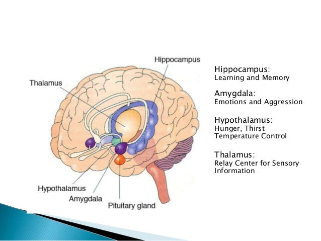 Limbic system and psychiatric disorders