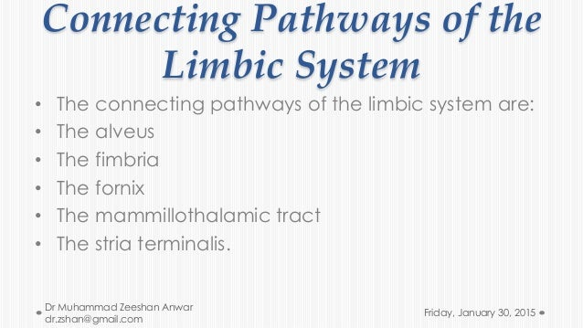 "the limbic system essay Another highly important structure of the limbic system is the amygdala, "" an almond shaped nucleus that is located in the medial temporal lobe, just anterior to the hippocampus [and which] links feelings of fear and anxiety to appropriate stimuli and defensive responses."