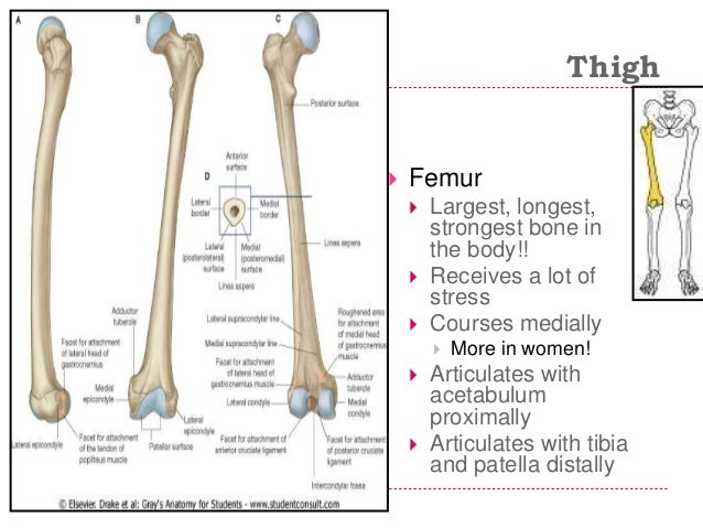 second most profitable cuboid bone inside the actual body