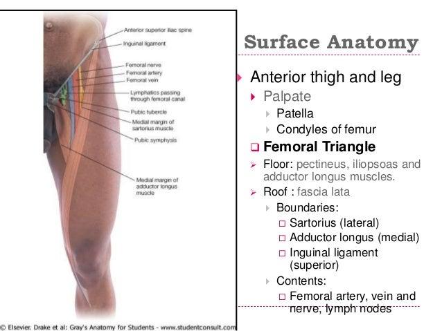 Limbs applied anatomy 2015