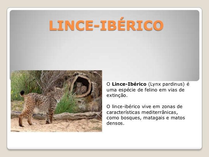 LINCE-IBÉRICO<br />O Lince-Ibérico(Lynxpardinus) é uma espécie de felino em vias de extinção.<br />O lince-ibérico vive em...