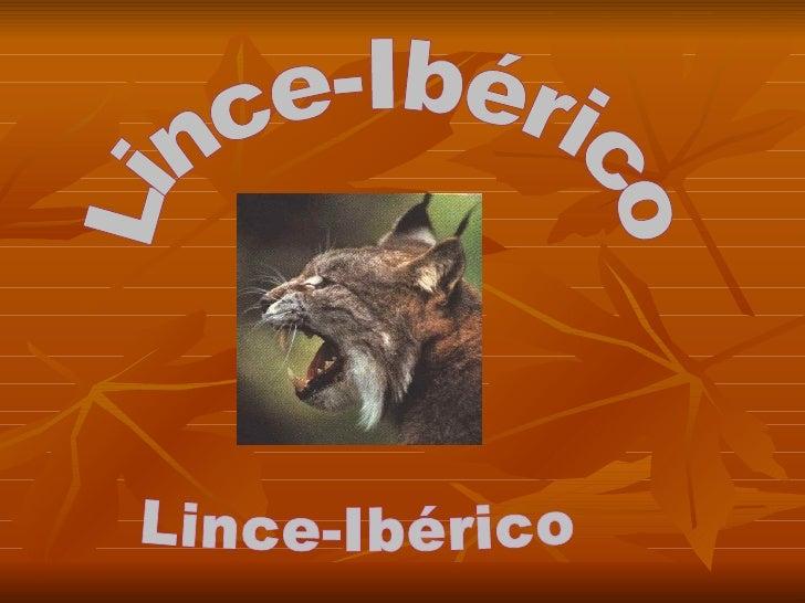 Lince-Ibérico Lince-Ibérico