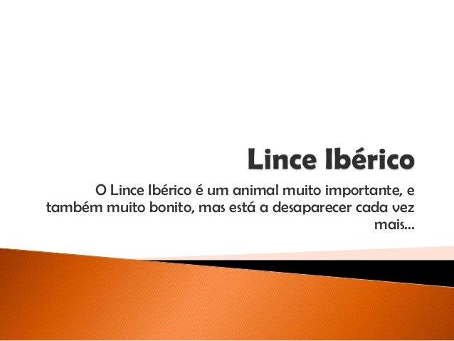 O Lince Ibérico é um animal muito importante, e também muito bonito, mas está a desaparecer cada vez mais...