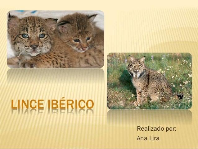 LINCE IBÉRICO Realizado por: Ana Lira