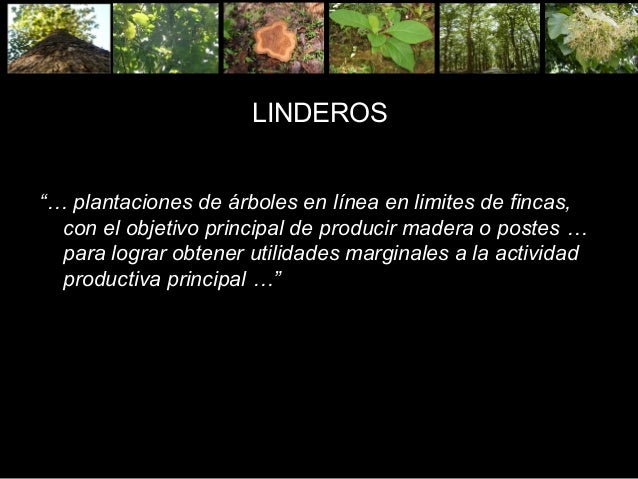 ARBOLES EN LINDEROS PDF