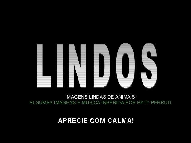 IMAGENS LINDAS DE ANIMAIS ALGUMAS IMAGENS E MUSICA INSERIDA POR PATY PERRUD
