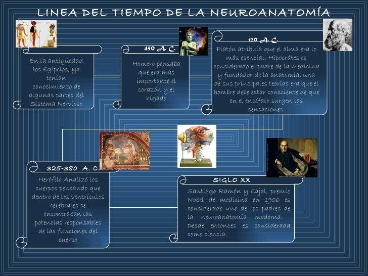 Hermosa Anatomía Bromea Trazadores De Líneas Uno Ideas - Anatomía de ...