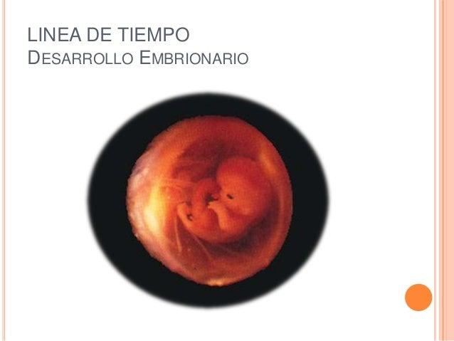 LINEA DE TIEMPO DESARROLLO EMBRIONARIO