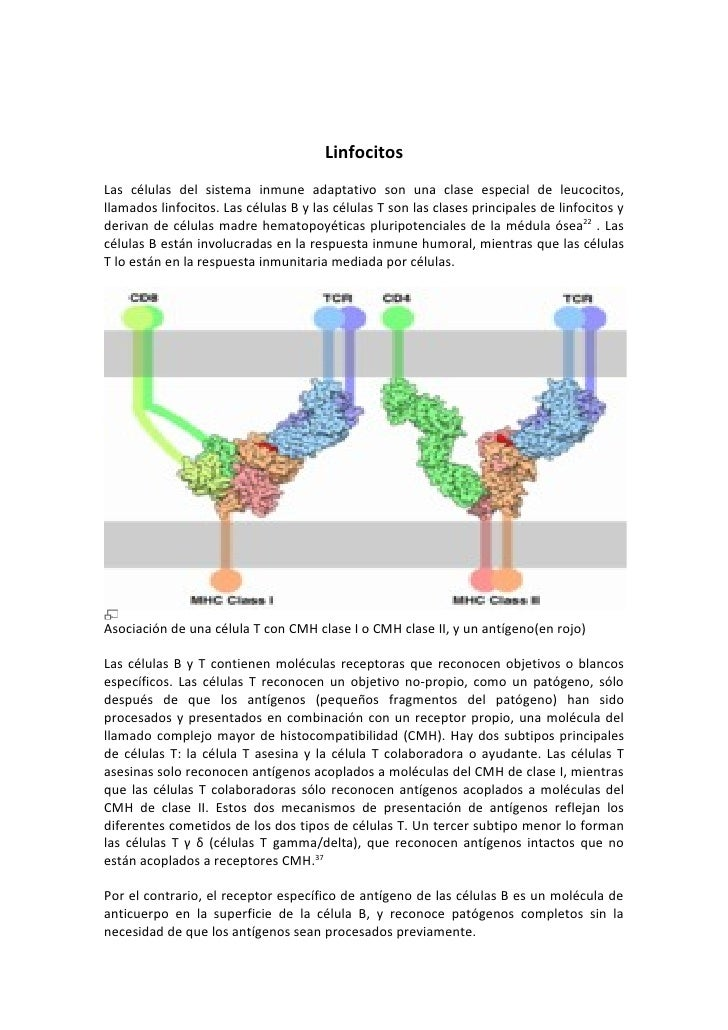 Linfocitos Las células del sistema inmune adaptativo son una clase especial de leucocitos, llamados linfocitos. Las célula...