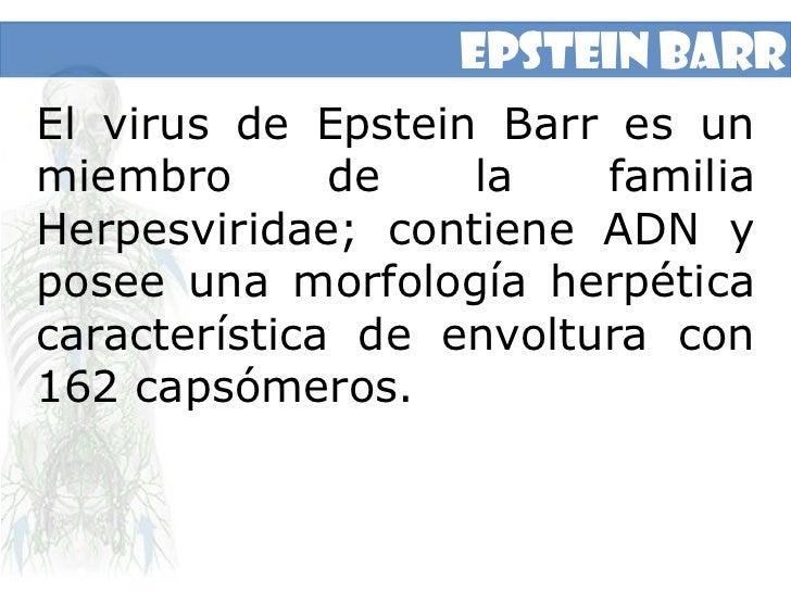 Epstein Barr<br />El virus de Epstein Barr es un miembro de la familia Herpesviridae; contiene ADN y posee una morfología ...