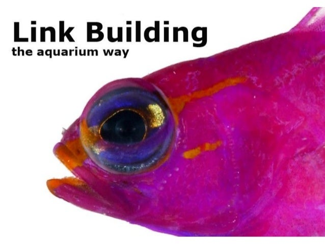Read more www.SeoCustomer.com You can also call this link building the aquarium way • The search engines don't like the li...