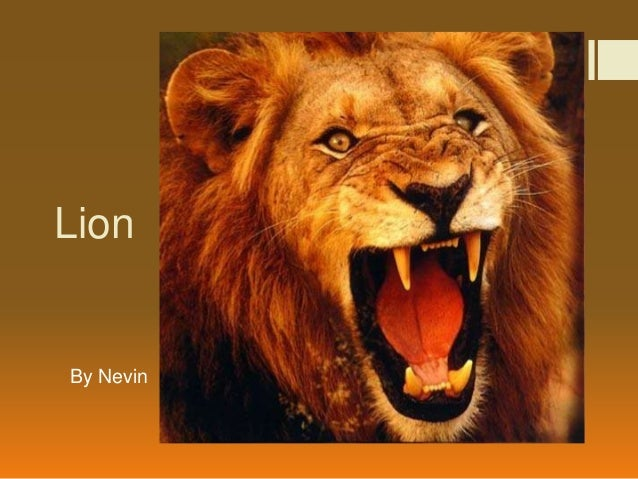 LionBy Nevin