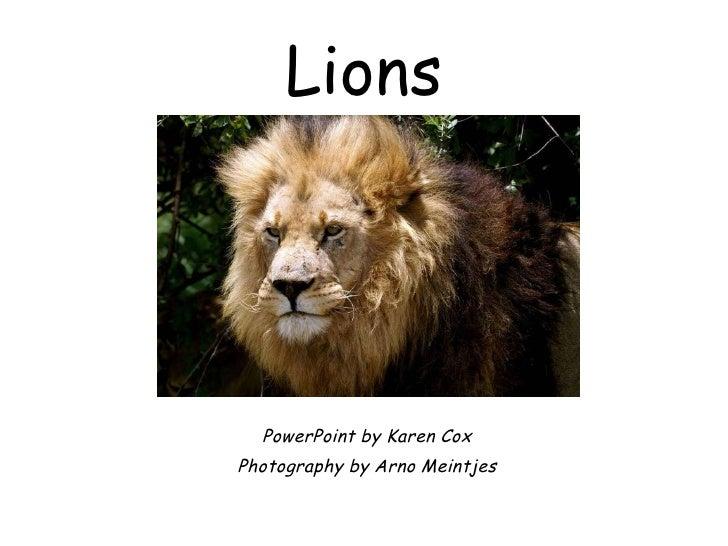 Lions <ul><li>PowerPoint by Karen Cox </li></ul><ul><li>Photography by Arno Meintjes </li></ul>