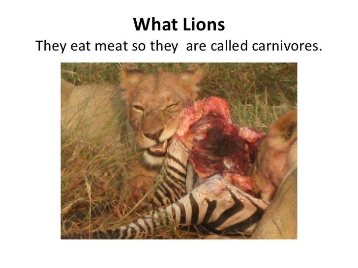 What LionsThey eat meat so they  are called carnivores.<br />