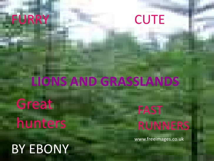 FURRY          CUTE  LIONS AND GRASSLANDSGreat           FASThunters         RUNNERS               www.freeimages.co.ukBY ...