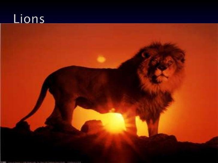 Lions<br />