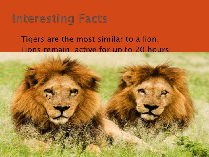 Lions powerpoint