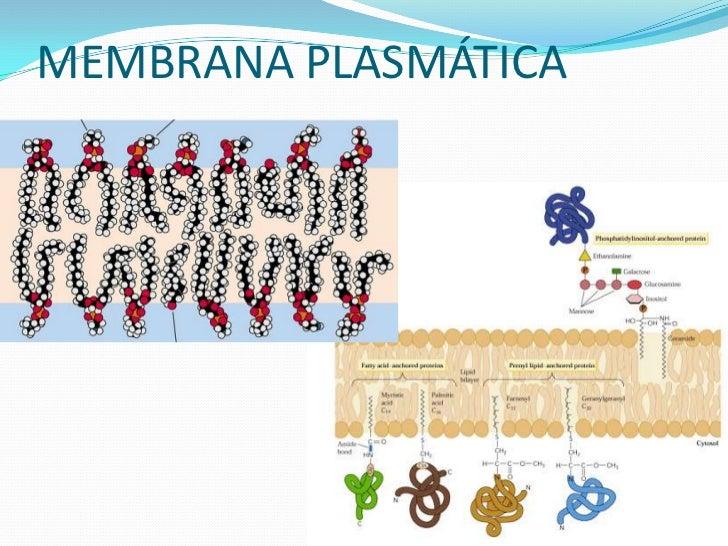 O COLESTEROL NO SANGUE            1- O colesterol forma um complexo            com os lipídeos e proteínas,            cha...