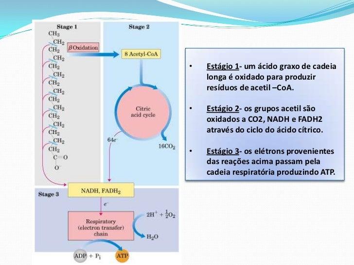 O acetil-CoA formado pela Beta-oxidação dos ácidos graxos só entrapara o Ciclo de Krebs se a degradação de lípides e carbo...