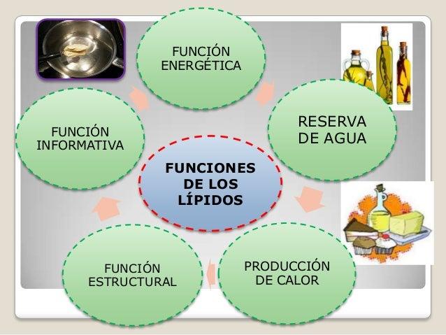 los esteroides son hormonas de tipo proteica