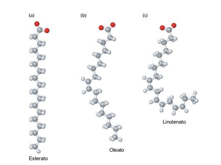 Lipidos Estructura Y Función