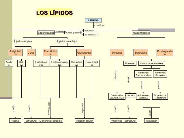 LOS LÍPIDOSLOS LÍPIDOS Ácidos grasos InsaponificablesSaponificables Lípidos complejosLípidos simples Esteroides Insaturado...