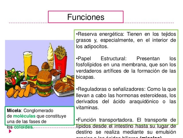 hormonas esteroides estructura quimica