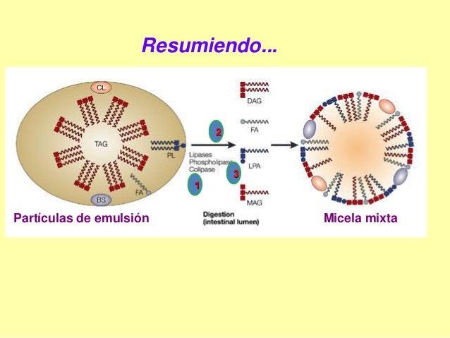 Lipidos, introducción al metabolismo. Presentación