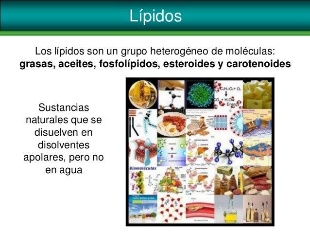 LípidosSustanciasnaturales que sedisuelven endisolventesapolares, pero noen aguaLos lípidos son un grupo heterogéneo de mo...