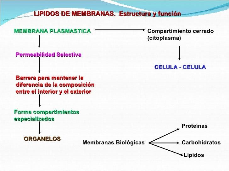 sintesis de esteroides rel