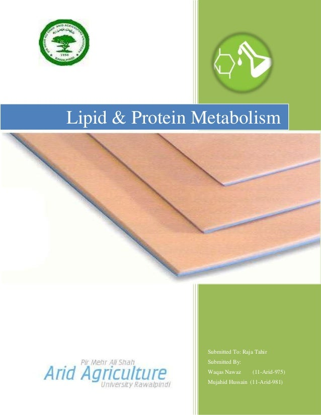 Lipid & Protein Metabolism                 Submitted To: Raja Tahir                 Submitted By:                 Waqas Na...