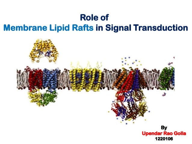 Role of Membrane Lipid Rafts in Signal Transduction  By Upendar Rao Golla 1220106