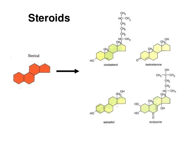 Lipids Chemistry Structure & Function