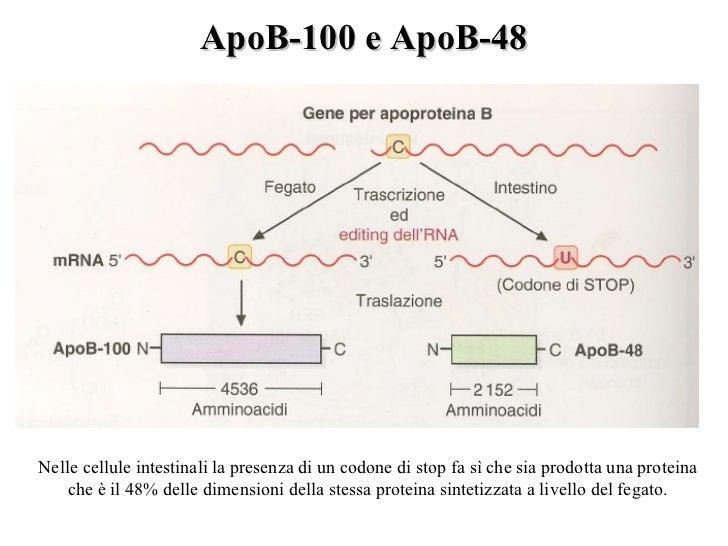 Antibiotici allatto di uninfiammazione di posizione di vene