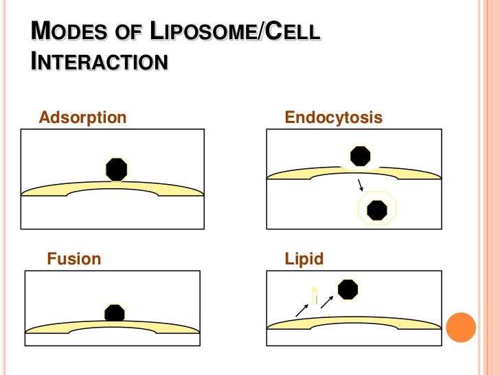 Protects drug</li></li></ul><li>Why Use Liposomes in Drug Delivery?<br />Release<br /><ul><li>Affect the time in which the...