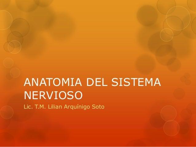 ANATOMIA DEL SISTEMA NERVIOSO Lic. T.M. Lilian Arquínigo Soto