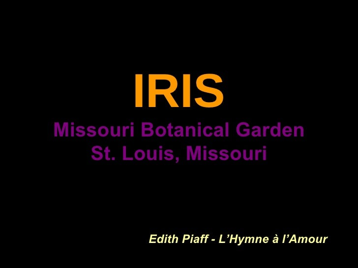 IRIS   Missouri Botanical Garden  St. Louis, Missouri Edith Piaff - L'Hymne à l'Amour